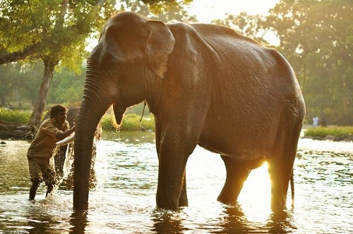 Dubare Elephant Camp, Kodagu
